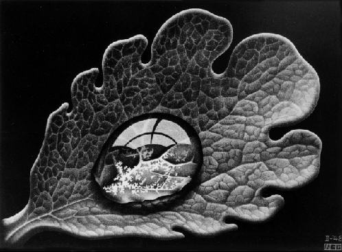LW356-MC-Escher-Dewdrop-1948